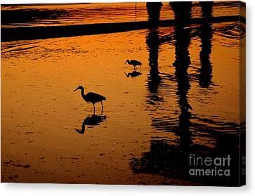 Egrets At Dusk Canvas Print by Dean Harte