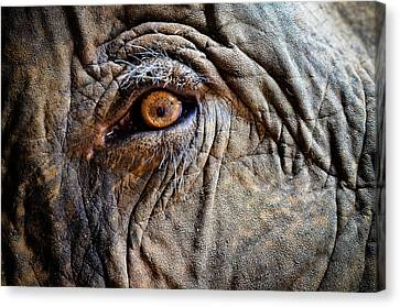 Elephant Eye Canvas Print by Photo by Volanthevist