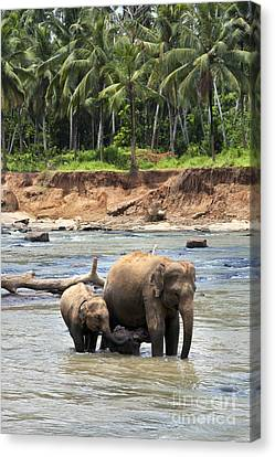 Elephant Family Canvas Print by Jane Rix