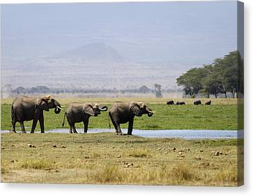 Elephants At The Watering Hole Canvas Print by Marion McCristall