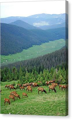 Elk Highlands Canvas Print by Robert Meyers-Lussier