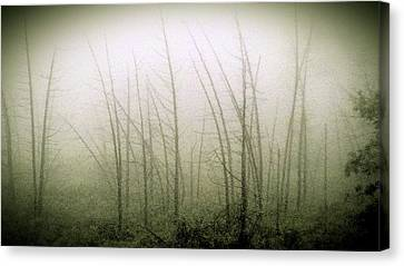 Emerson Bog At Dawn Canvas Print by Mike Greco
