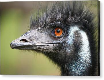 Emu Canvas Print by Karol Livote