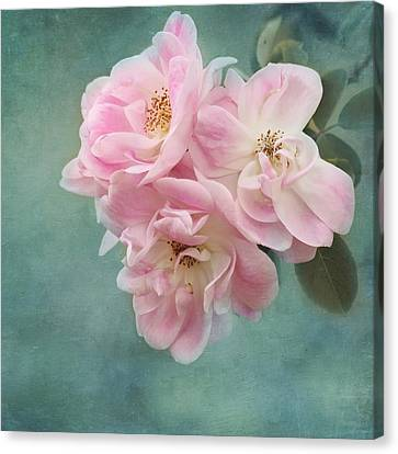 Enchanted Pink Rose Canvas Print by Kim Hojnacki