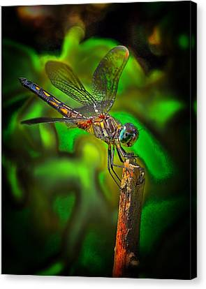 Enhanced Dragonfly Canvas Print by Dave Sandt