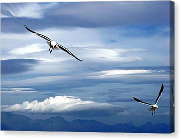 Enjoying The Sky Canvas Print by Andrew  Hewett