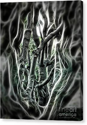 Entangled Worlds Canvas Print by Danuta Bennett