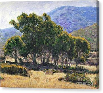 Eucalyptus Grove Catalina  Canvas Print by Randy Sprout