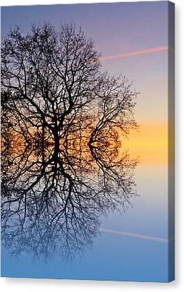 Evening Sky Trails Canvas Print by Sharon Lisa Clarke
