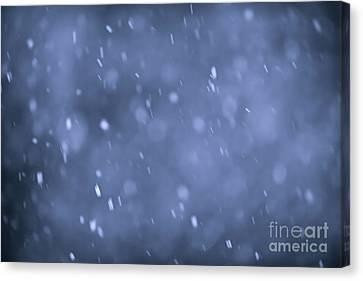 Evening Snow Canvas Print by Elena Elisseeva