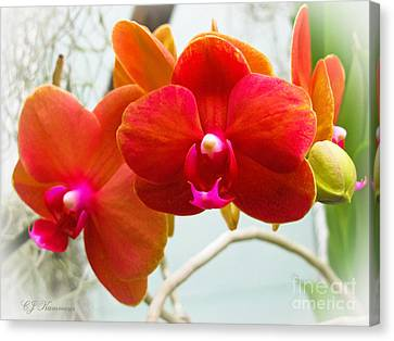 Exotic Orchids Canvas Print by Colleen Kammerer
