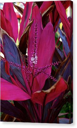 Explosion Canvas Print by Joseph Yarbrough