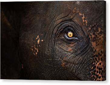Eye Of Thai Elephant Canvas Print by presented by Zolashine