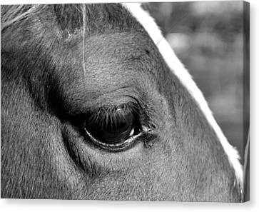 Eye Of The Horse Black And White Canvas Print by Sandi OReilly