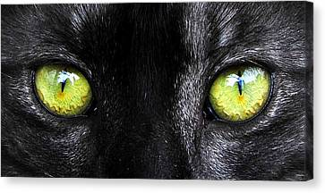 Eyes Canvas Print by David Lee Thompson