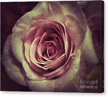 Faded Rose Canvas Print by Angela Wright