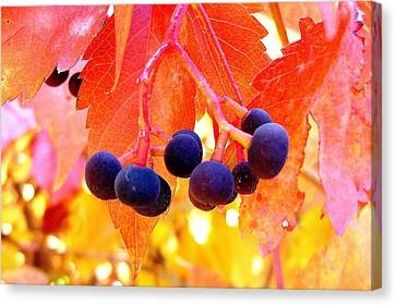Fall Colors Canvas Print by Marilyn Magee