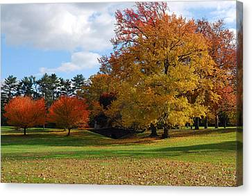 Fall Foliage Canvas Print by Lisa Phillips