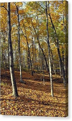 Fall In The Forest 1 Canvas Print by Marty Koch