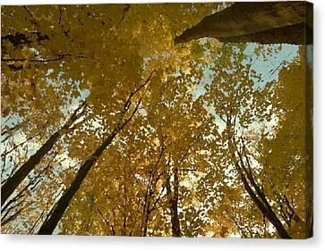 Fall Scene Canvas Print by Tom Bush IV
