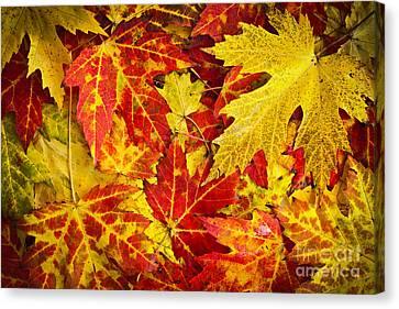 Fallen Autumn Maple Leaves  Canvas Print by Elena Elisseeva