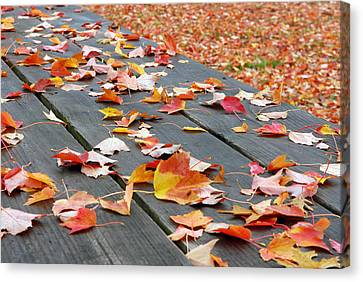 Fallen Leaves Canvas Print by Lisa Phillips