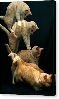 Falling Cat Canvas Print by Micael  Carlsson