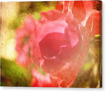 Falling In Love Canvas Print by Amy Tyler