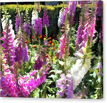 Fanfare Of Foxgloves Canvas Print by Elaine Plesser