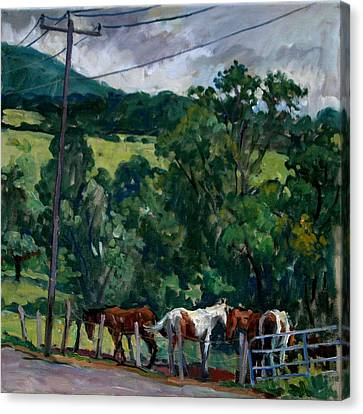 Farm Horses Berkshires Canvas Print by Thor Wickstrom