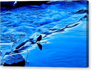 Feathered Friend Canvas Print by Joshua Dwyer