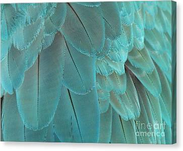 Feathery Turquoise Canvas Print by Sabrina L Ryan