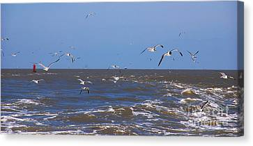 Feed Us - Ferry To Galveston Tx Canvas Print by Susanne Van Hulst