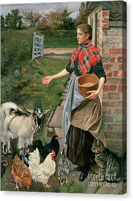 Feeding The Chickens Canvas Print by William Edward Millner
