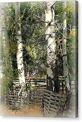 Fenced Aspen Canvas Print by Cindy Wright