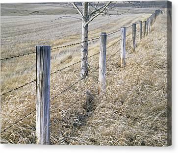 Fenceline And Cropland In Late Fall Canvas Print by Darwin Wiggett