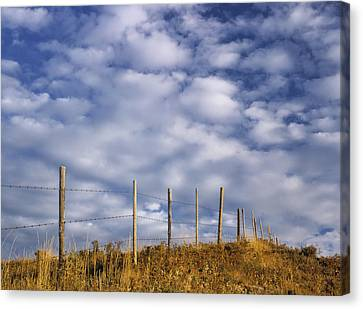 Fenceline In Pasture With Cumulus Canvas Print by Darwin Wiggett