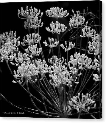 Fennel Flowers Canvas Print by Grace Dillon