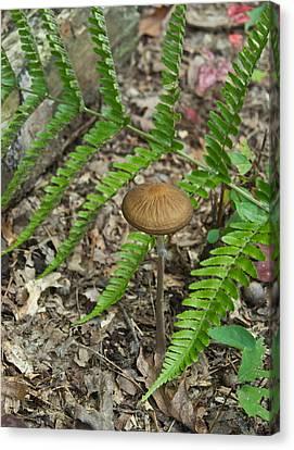 Fern Frond And Mushroom 6 Canvas Print by Douglas Barnett