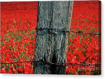 Field Of Poppies With A Wooden Post. Canvas Print by Bernard Jaubert