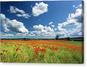 Field Of Red Poppies Canvas Print by Chris Lishman