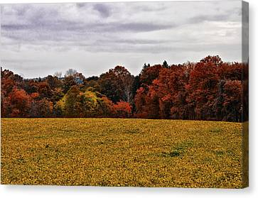 Fields Of Gold Canvas Print by Bill Cannon