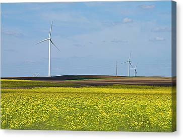 Fields Of Gold Canvas Print by Straublund Photography