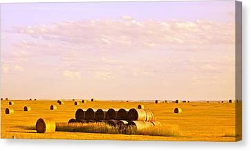 Fields Of Plenty Canvas Print by Kate Purdy