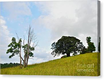 Fig Tree On A Hill Canvas Print by Kaye Menner