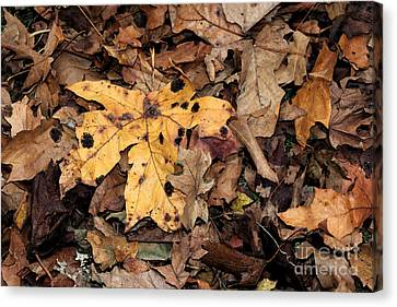 Final Resting Place Canvas Print by Terri Thompson