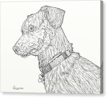 Finn In Black And White Canvas Print by Salvadore Delvisco