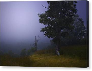 Fireflies Canvas Print by Ron Jones