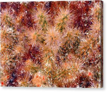 Fireworks Explosion Canvas Print by Marilyn Sholin