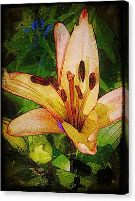 First Asiatic  Canvas Print by Chris Berry